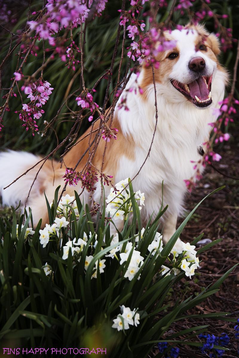 しだれ桜も咲きはじめて