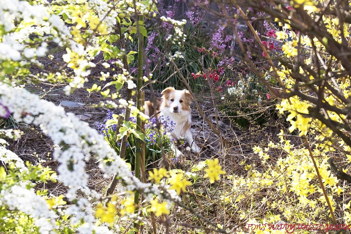春色いっぱい!