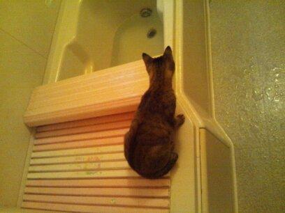 お風呂の管理