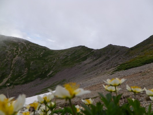 2015.07.仙丈ケ岳