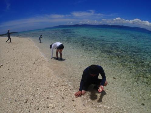 ぱなり サンゴ 拾い