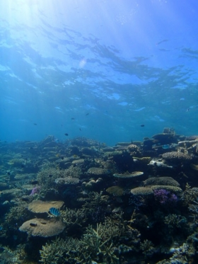 フージー からの サンゴ