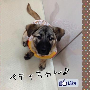 PhotoGrid_1422404040750.jpg