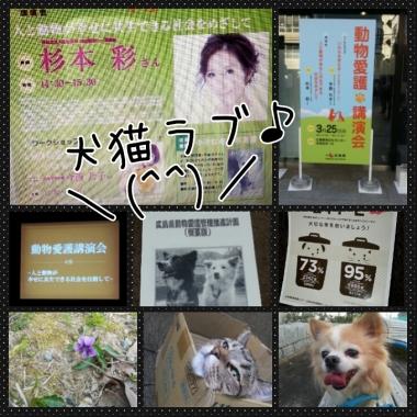 PhotoGrid_1427350200819.jpg