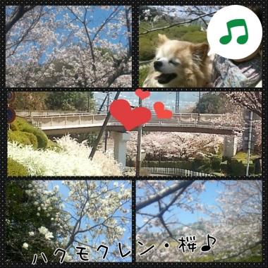 PhotoGrid_1427779295443.jpg