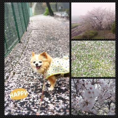 PhotoGrid_1428201614831.jpg