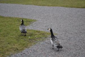 3月28日 スカンセン野外博物館の鳥