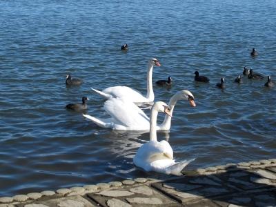 道の駅 水の郷 さわら 白鳥
