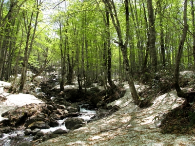 乳頭温泉・黒湯 ブナの森