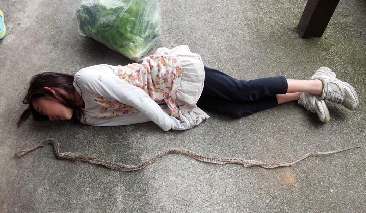 2015.06ヘビの抜け殻