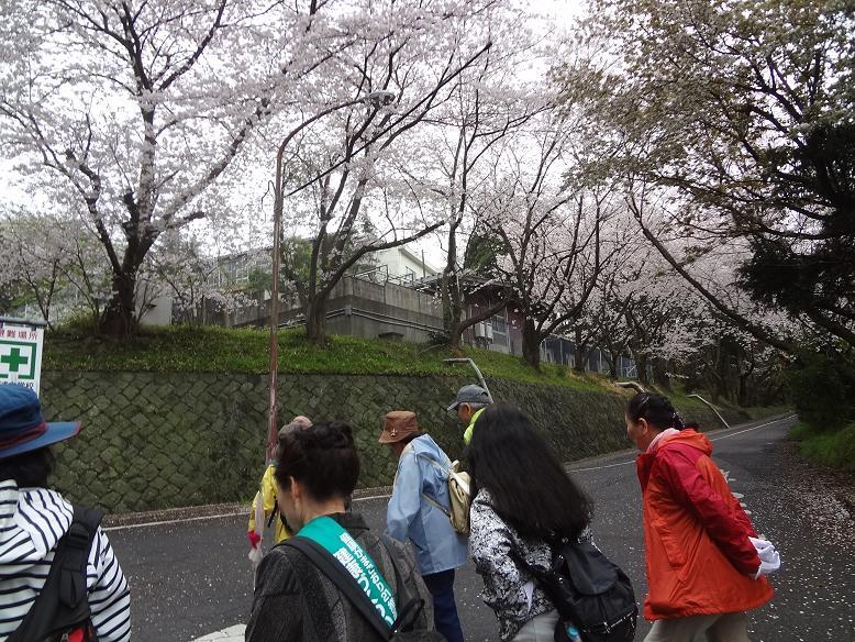 20150403walk_3.jpg