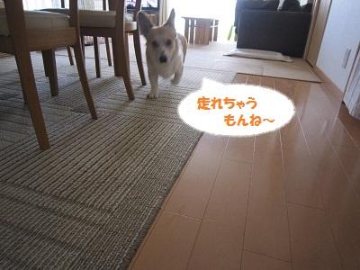 IMG_0009--.jpg