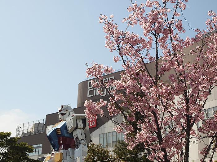 2015桜ガンダム 023