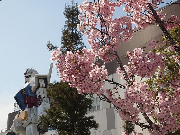2015桜ガンダム 037