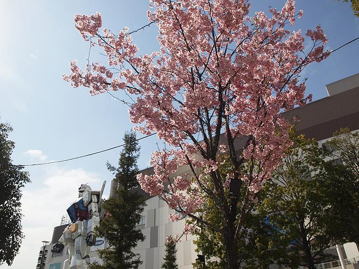 2015桜ガンダム 051