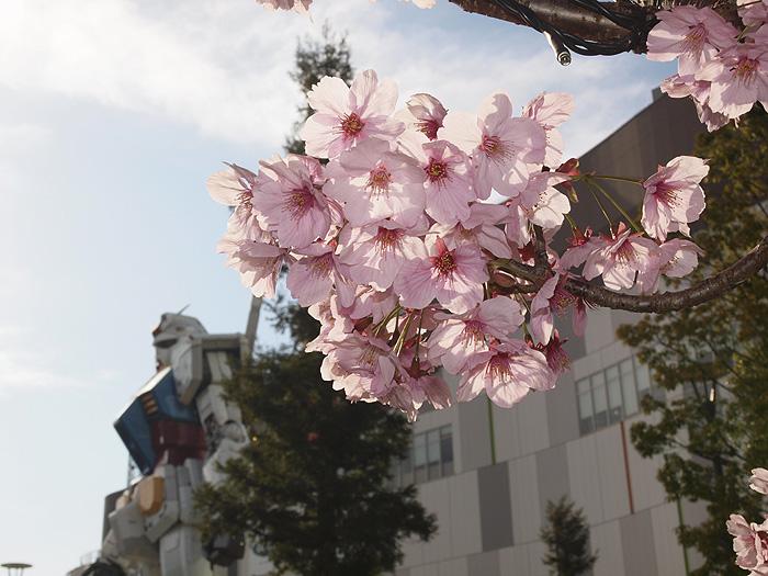 2015桜ガンダム 075