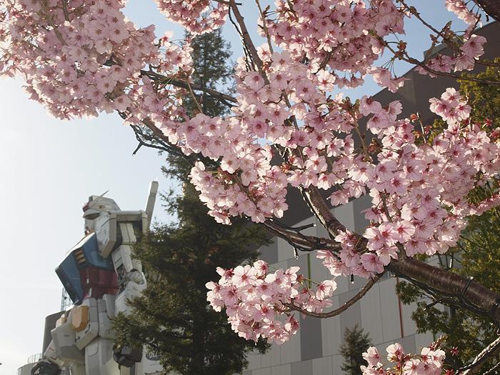 2015桜ガンダム 079