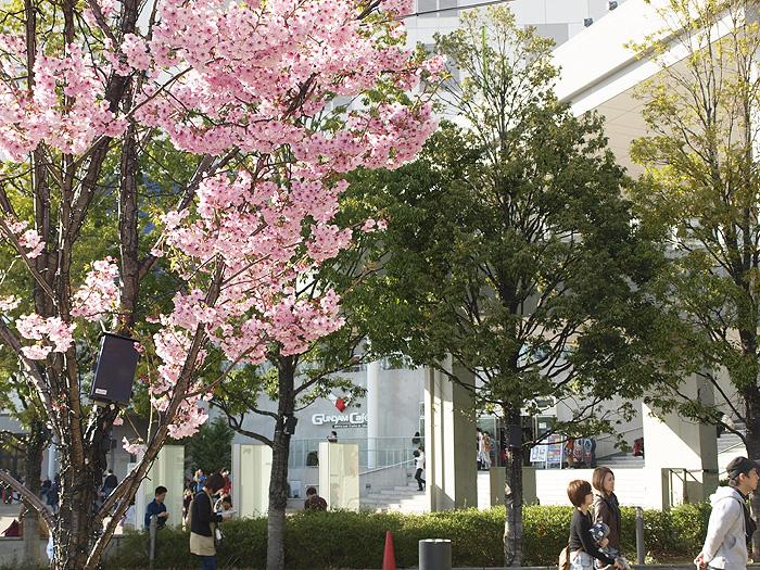 2015桜ガンダム 088