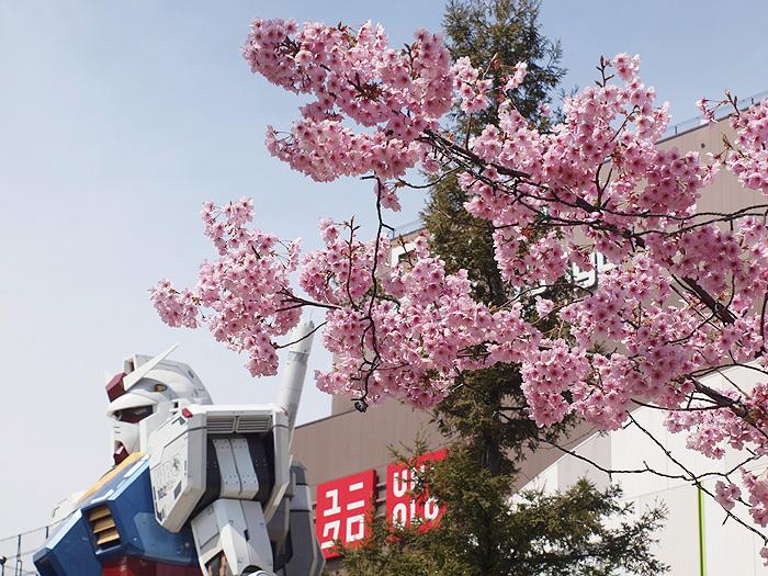 2015桜ガンダム 113