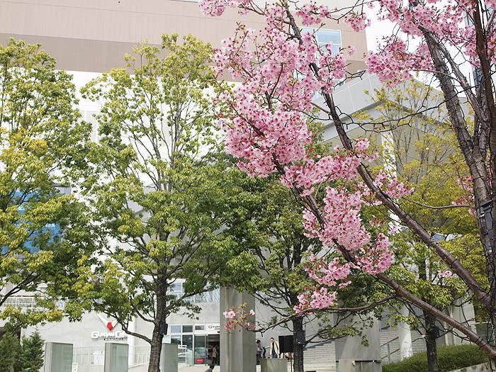 2015桜ガンダム 133