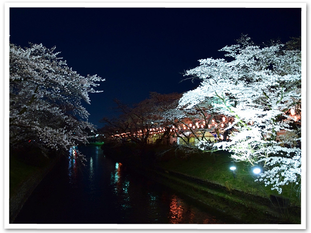 夜桜☆羽村堰