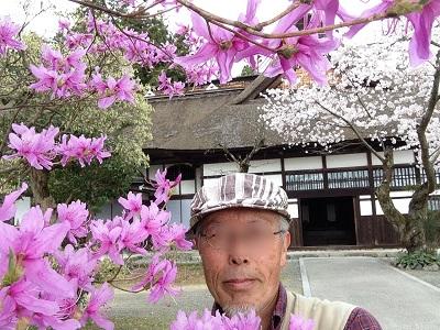 あきる野市桜