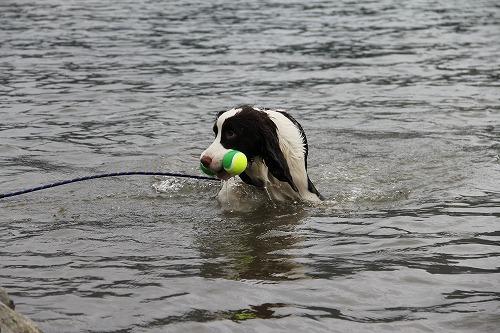 015 2013.9.14 西湖で泳ぎましたESSオフ会