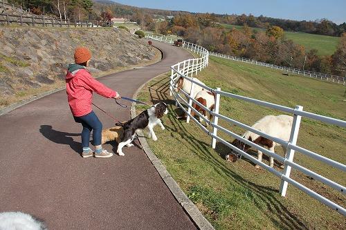 018 2013.11.2~4 清里まきば牧場