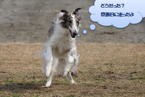2015.3.22 162 ジョジョ2走目