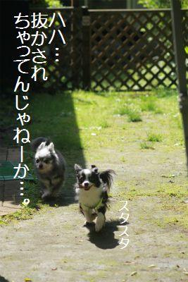 IMG_1494_201506140041060b7.jpg