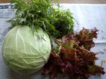 20141223し~ちゃん家から野菜