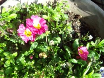 20150317花