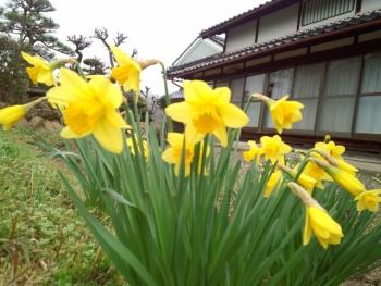 20150321花