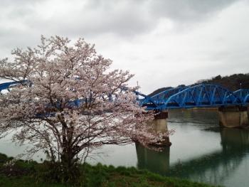 20150401桜2