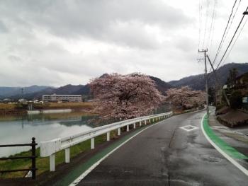 20150401桜3