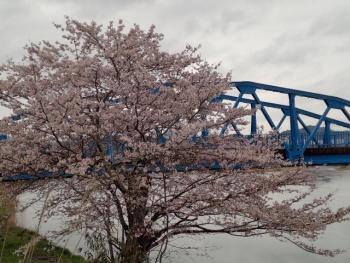 20150401桜