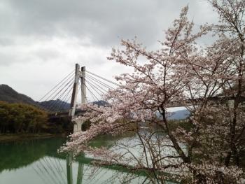 20150401桜4