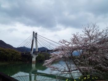 20150401桜5