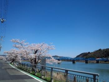 20150402桜