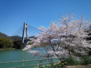 20150402桜4