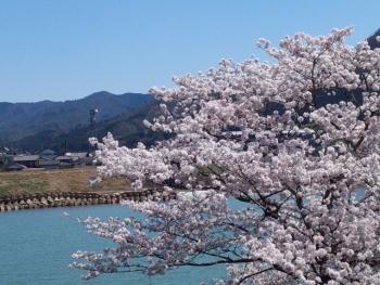 20150402桜3