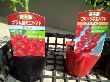 20150502野菜の苗2