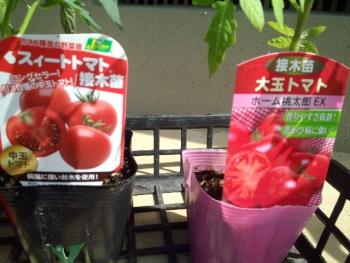 20150502野菜の苗3