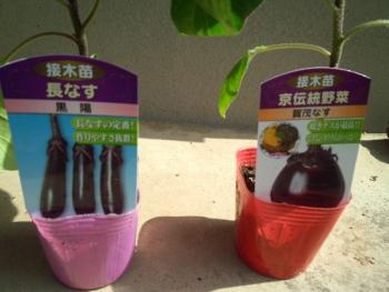 20150502野菜の苗5