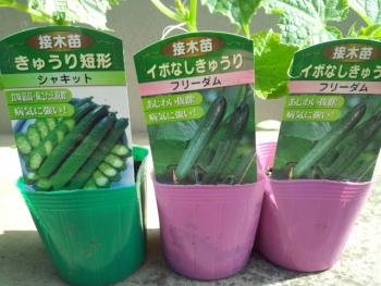 20150502野菜の苗7