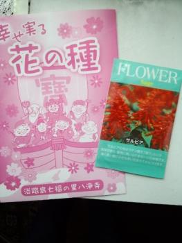 20150603花の種3