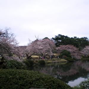 新宿御苑の庭園