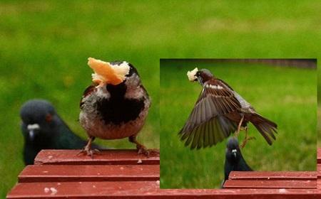 雀の強襲~