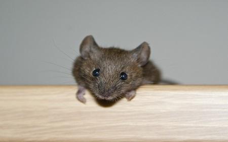 マウスで旨く行っても・・