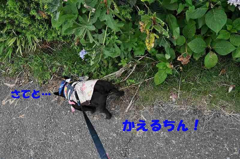 DSC_0235_2015062209220471e.jpg